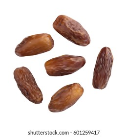 Dried Dates Isolated on White Background. Fruits of Date Palm or Phoenix Dactylifera Vector Illustration