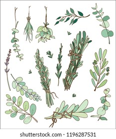 dried herbs in vector