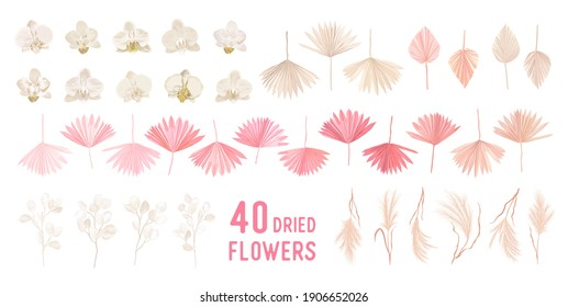Dried pampas grass, lunaria flowers, orchid, tropical palm leaves vector bouquets. Pastel watercolor floral template isolated collection for wedding wreath, bouquet frames, decoration design elements