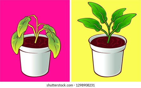 Dried plant, before-after. Vector illustration