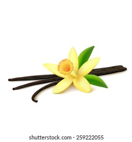 Dried vanilla pods with leaves and flower isolated on white background. Vector illustration.