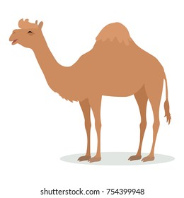 Dromedary camel cartoon character. Funny camel with one hump flat vector isolated on white. African fauna. Camel icon. Wild animal illustration for zoo ad, nature concept, children book illustrating