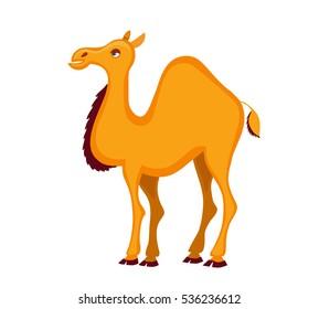 Dromedary.  Cartoon camel. Vector illustration isolated on white background.