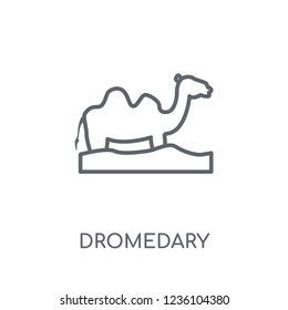 Dromedary linear icon. Modern outline Dromedary logo concept on white background from Desert collection. Suitable for use on web apps, mobile apps and print media.