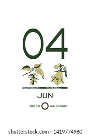 Druid calendar of flowers and trees. Leaf calendar template. Day after day. June 4 is a hornbeam tree and a harebell flower. Astrological celtic horoscope. Eco design