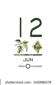 Druid calendar of flowers and trees. Leaf calendar template. Day after day. June 12 is a hornbeam tree and a tulip flower. Astrological celtic horoscope. Eco design