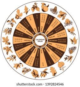 Druid celtic calendar. Trees: apple, fir, elm, cypress, poplar, hackberry, pine, willow, linden, oak, nutwood, rowan, birch, maple, walnut, jasmine, chestnut, ash, hornbeam, fig, olive, beech.