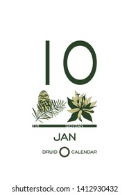 Druidic plant calendar. January 10th day corresponds to fir tree and gentian flower. Celtic astrological horoscope. Eco design for natural decor. Tear-off calendar template