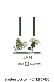 Druidic plant calendar. January 11th day corresponds to fir tree and thistle flower. Celtic astrological horoscope. Eco design for natural decor. Tear-off calendar template