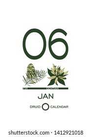 Druidic plant calendar. January 6th day corresponds to fir tree and gentian flower. Celtic astrological horoscope. Eco design for natural decor. Calendar template