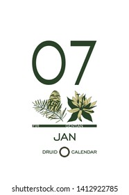 Druidic plant calendar. January 7th day corresponds to fir tree and gentian flower. Celtic astrological horoscope. Eco design for natural decor. Calendar template