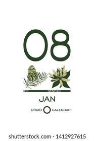 Druidic plant calendar. January 8th day corresponds to fir tree and gentian flower. Celtic astrological horoscope. Eco design for natural decor. Calendar template