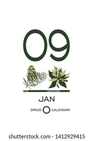 Druidic plant calendar. January 9th day corresponds to fir tree and gentian flower. Celtic astrological horoscope. Eco design for natural decor. Calendar template