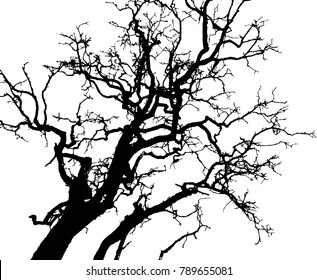Dry tree died dead isolated on white background