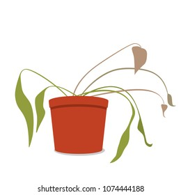 drying home flower in a pot. The dead plant. flat vector illustration isolated on white background