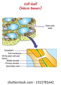 ducation Chart of Biology for Plant Cell Diagram