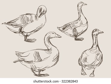 Ducks In A Line Images Stock Photos Amp Vectors Shutterstock