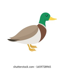 duck on the side. Isolated vector illustration