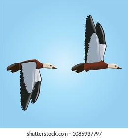 duck, vector, animal