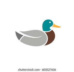 Duck. Wild bird on white background