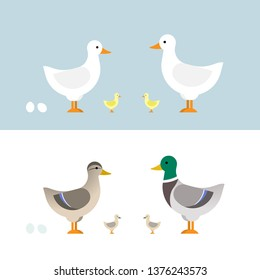 Ducks set vector illustration in color. Character design in flat.