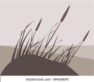 Dune Grass Images, Stock Photos & Vectors   Shutterstock