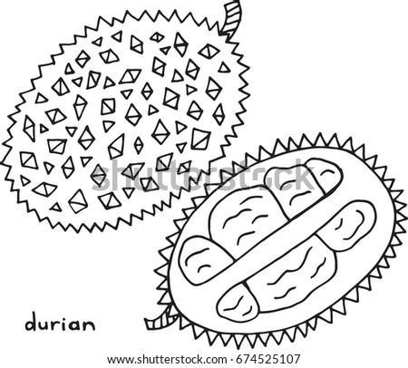 Durian Coloring Page Graphic Vector Black Stock Vector Royalty Free