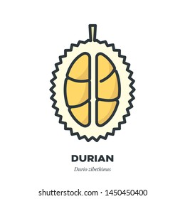 Durian fruit icon, outline with color fill style vector illustration, cross-sction
