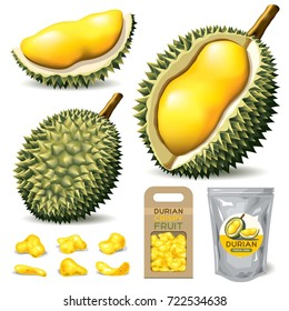 Durian Isolated Vector on white background