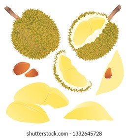 Durian vector illustration set. Whole, sliced and halved Durian graphics.