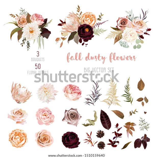 Dusty orange and creamy antique rose, beige and pale flowers, fern, creamy dahlia, ranunculus, protea, fall leaves big vector collection. Floral pastel watercolor style bouquets. Isolated and editable