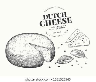 Dutch cheese illustration. Hand drawn vector dairy illustration. Engraved style gouda head. Vintage food illustration.