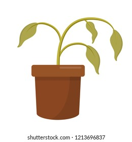 dying dry dead houseplant in a plant pot flat design icon