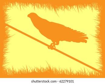 eagle autumn frame