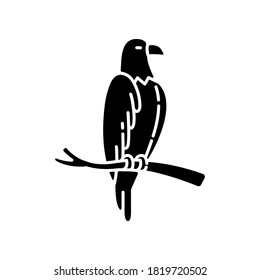 Eagle black glyph icon. Dangerous bird of prey, flying animal, winged predator. American national silhouette symbol on white space. Hawk, falcon sitting on tree branch vector isolated illustration