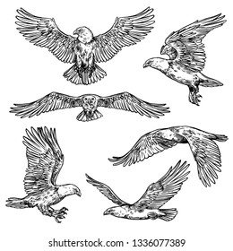 Eagle flight sketches, bird with spread wings and sharp claws with beak. Vector isolated hawk icon, symbol of nobility, power and strength. Wild falcon outline in motion