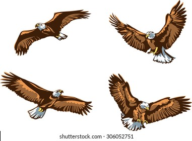 Eagle, flying eagle, color, vector