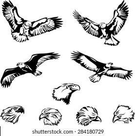 Eagle, flying eagle,the head of an eagle