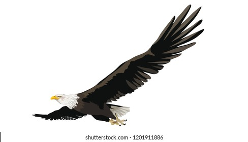 Eagle flying on white isolated background. Bird in flight. Symbol of freedom and America. Detailed vector illustration.