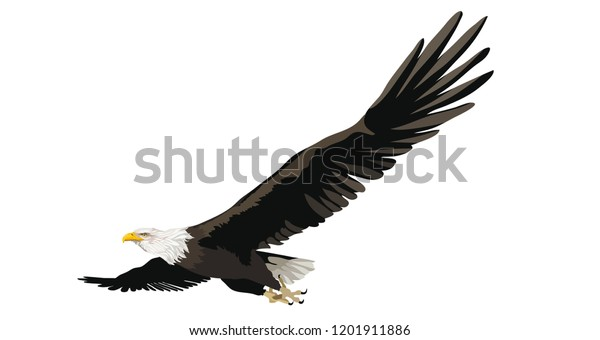 Eagle Flying On White Isolated Background Stock Vector (Royalty Free