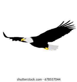 Eagle, flying eagle, vector
