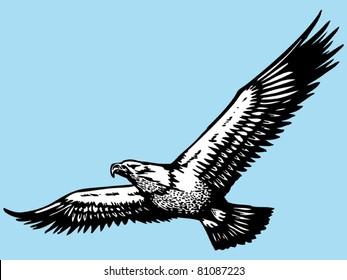 eagle hand drawn
