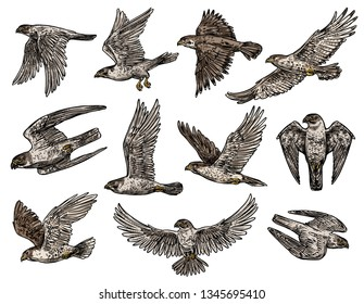 Eagle and hawk, falcon and vulture, vector isolated birds in flight. Vector wild predators, heraldic style, symbol of nobility and power or strength, aggressive beast with claws