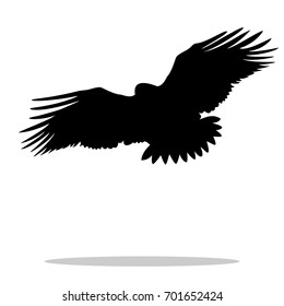 Eagle hawk golden eagle bird black silhouette animal. Vector Illustrator.