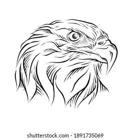 Eagle Head hand drawn illustration