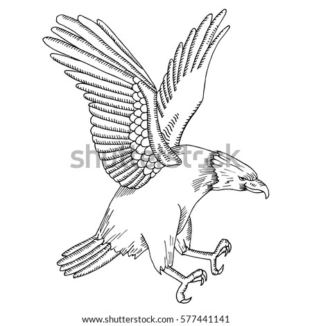 Eagle Illustration On Simple White Background Stock Vector (Royalty ...