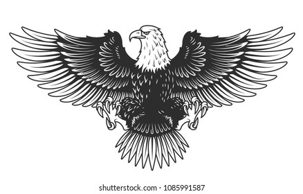 Eagle isolated on white vector illustration. Vector illustration.