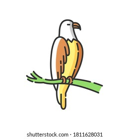 Eagle RGB color icon. Dangerous bird of prey, flying animal, winged predator. American national. Hawk, falcon sitting on tree branch isolated vector illustration