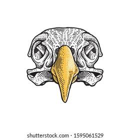Eagle Skull. Hand Drawn Vector  Illustration