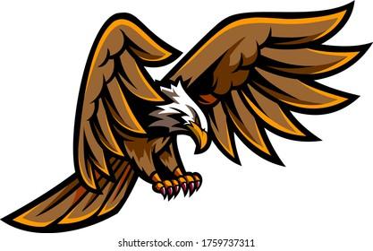 eagle wing bird animal predator falcon
